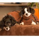 Hundemantel fit4dogs dryup cape braun Mini Cape 30cm